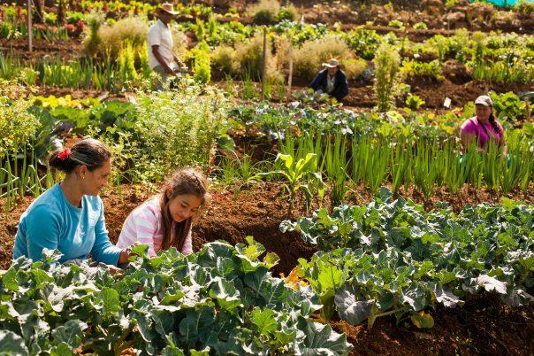 Las huertas agroecológicas comunitarias hacen parte del atributo de sostenibilidad
