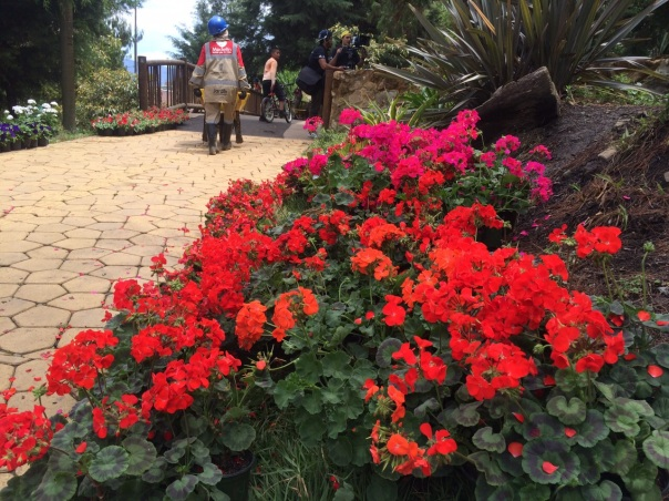 El JCM se viste de flores